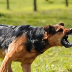 Understanding Oregon's Dog Bite and Owner Liability Laws